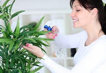 Комнатные растения для увеличения влажности